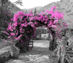 Selective color photography, love it! Grey Pictures, Black And White Pictures, Beautiful Pictures, Splash Photography, Color Photography, Nature Photography, Color Splash, Pink Color, Color Pop
