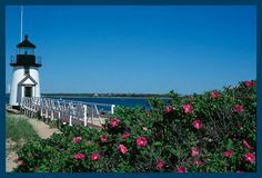Beach Roses at Brandt Point Light, Nantucket | Flickr - Photo Sharing!