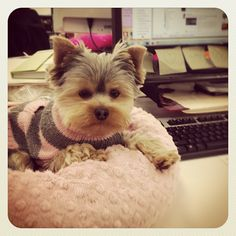 I want to bring my doggie to work!