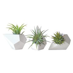 Geo Planters Set of 3 ($45) ❤ liked on Polyvore featuring home, home decor, floral decor, plants, fillers, succulent pots and succulent planter