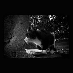 https://flic.kr/p/zN63DS | Ruby November 2015  #cat #blackandwhitephotography