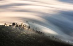 Clouds skim over a Japanese forest in this National Geographic Your Shot Photo of the Day.