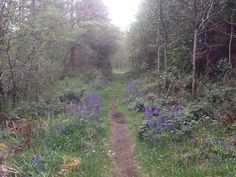 Bards In The Woods: Canals, Garlic & Bluebells at Lough Key Forest