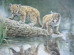 """Charles Frace - """"Reflections"""" (cougar cubs)"""