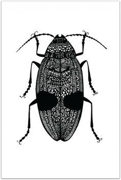 Insects on Pinterest | Beetles, Insect Art and Zentangle