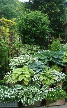 38 Amazingly Green Front-yard & Backyard Landscaping Ideas Get Basic Engineering, Home Design & Home Decor. Amazingly Green Front-yard & Backyard Landscaping Ideasf you're anything like us, y Back Gardens, Small Gardens, Outdoor Gardens, White Gardens, Landscaping With Rocks, Front Yard Landscaping, Landscaping Ideas, Inexpensive Landscaping, Tropical Garden Design