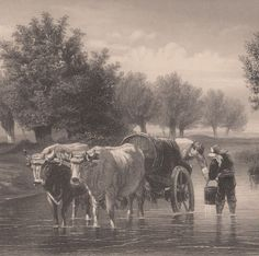 Antique Print Domestic Animals Livestock Cattle Cows (D63) via Grandpa's Market. Click on the image to see more!