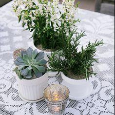 simple. #succulents