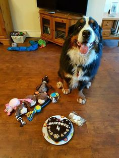 =Murdock's 2nd cake from us! :D= A year ago we made a cake for this absolutely gorgeous boy, which was the first ever cake to leave the Faerytails barkery. He turned 4 yesterday and celebrated with another Faerytails cake. Happy birthday to the handsome Murdock!! :) <3