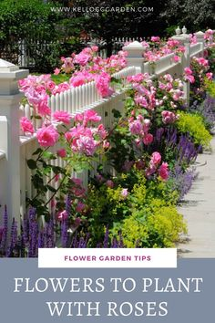 Companion planting is the masterful way of planting different species of plants near one another for mutually beneficial reasons. There are countless benefits to companion planting for roses! Learn about them here. Rose Companion Plants, Companion Gardening, Planter Des Roses, Rose Garden Design, Small Rose Garden Ideas, Front Garden Landscape, Planting Roses, Garden Roses, Gardening For Beginners