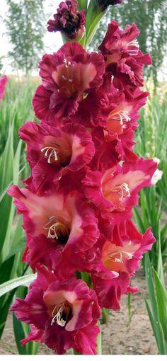 Growing Gardens, Farm Gardens, Colorful Flowers, Beautiful Flowers, Flower Farm, Flower Photos, Gardening, Rose, Green