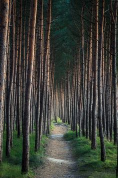 ~~Follow the Path   into the pine forest   by krilrikur~~