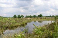 plas en groen in Kikbeekbron
