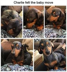 22 Funny Animal Pictures Of The Day | Funny Animals | Daily LOL Pics