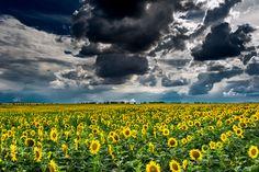 yellow field - null