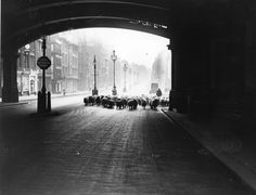 vintage everyday: 12 Interesting Vintage Photos of Sheep on the Streets of London in the and London Street, London City, Clapham Common, Rare Historical Photos, Hampstead Heath, Bethnal Green, Green Park, Vintage Pictures, Vintage Photographs