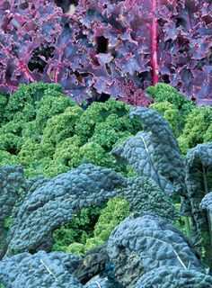"""Cold-hardy kale is easy to grow and makes for tasty winter soups and salads.  Click the photo to learn how to """"Grow Your Own Kale"""""""