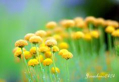 Con color amarillo