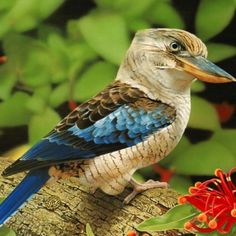 The Kukaburra Bird (tree kingfisher). Kingfisher Birds are a group of small to… Polo Sul, Polo Norte, Exotic Birds, Colorful Birds, Wildlife Photography, Animal Photography, Kingfisher Bird, Most Beautiful Birds, Beautiful Gardens