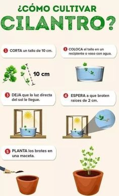 Eco Garden, Home Vegetable Garden, Natural Garden, Fruit Garden, Edible Garden, Home And Garden, Organic Gardening, Gardening Tips, All About Plants