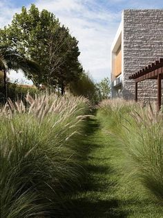 Jardin réalisé autour de l´harmonie, nature et habitat: moderner Garten von Paul Marie Creation