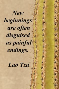 "New beginnings are often disguised as painful endings."" -- Lao Tzu – On stock image of saguaro cactus taken by Florence McGinn -- Explore inspiring wisdom in quotes at http://www.examiner.com/article/travel-a-road-of-literate-quotes-about-the-journey"