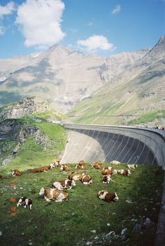 near  Kaprun - Austria... Tough deciding where to pin this one.  The cows are so calm next to freeway. ld