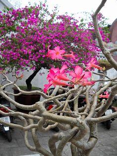 Hoi An Vietnam Vietnam Tours, Photo Printing Services, Photo Blanket, Hoi An, Photo Canvas, Print Pictures, Cambodia, Photo Book, Dreams