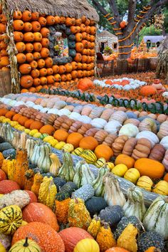 See a fabulous display of pumpkins, gourds and squash at the Dallas Arboretum now through November In various sizes, whimsical forms and bright colors, you'll want to take notes as a reminder to order seed and grow your favorites next year. Pumpkin Display, Spiced Cider, Dallas Arboretum, Squashes, Autumn Garden, Fall Harvest, Fall Pumpkins, Fall Season, Fall Halloween