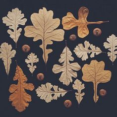 INSPIRATION: Fall art - These are amazing. I love these soft ochre and brown colors. Oak Leaves, Autumn Leaves, Pressed Leaves, Art Et Nature, Image Deco, Illustration Botanique, Creation Art, Nature Collection, Leaf Art