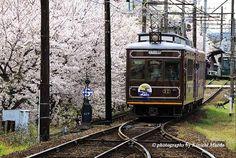 嵐電#Kyoto#Japan #randen#sakura# railway photography Kinichi Maeda
