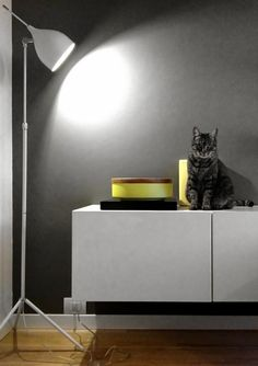 Details of us: GINO V.I.P. Monday's pet on furniture by Desire to Inspire blog