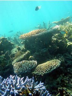 Diversos organismos pueden cubrir cada centímetro cuadrado de un arrecife de coral.