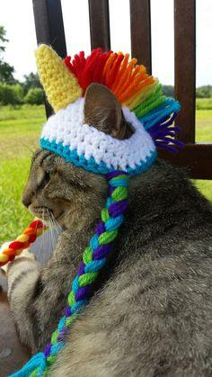 Top 11 des chats qui portent à merveille le chapeau en crochet