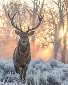 winter, deer, and forest image winter, deer, and forest image Nature Animals, Animals And Pets, Cute Animals, Wild Animals, Wildlife Photography, Animal Photography, Amazing Photography, Beautiful Creatures, Animals Beautiful
