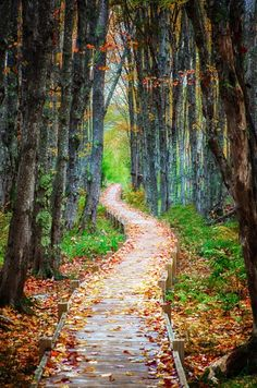A walk through Autumn, Acadia