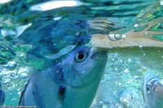 Pulau Tioman, fish