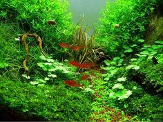 Nano Aquarium einrichten Ideen Wasserpflanzen