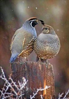 Fall Scents, Bird, Animals, Autumn, Animales, Animaux, Fall Season, Birds, Animal