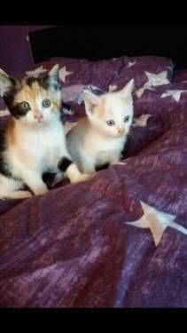 Kitten dürfen ausziehen in Marl