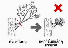 Tree Pruning, Playing Cards, Landscape, Scenery, Playing Card Games, Game Cards, Corner Landscaping, Playing Card
