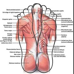 Here the muscles are shown, so neat. #muscles #reflexology #anatomy #foot #natural #stimulation""