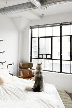 Dreamy Space - 30 Pets That Stole The Show In Home Shoots - Photos