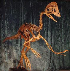 """Scientists Discover New Dinosaur Species Dubbed 'Chicken From Hell' 