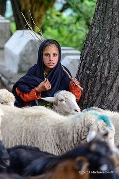 The little Shepherd Kashmir