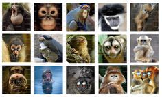 Monkeys Digital Collage 1.5 inch / 136 by LisaChristines on Etsy, $1.50