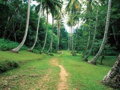 Welchman Hall Gully - Top 10 things to do in Barbados