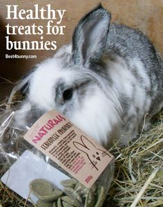 Rabbit treats – what makes a healthy treat for bunnies & why!