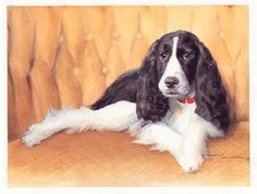 English springer spaniel watercolor by Mike Theuer - WetCanvas