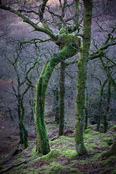 This Enchanted Ent in Cumbria is only further proof that England is, indeed, Middle Earth.